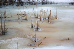Printemps tardif / Late spring (BLEUnord) Tags: étang pond eau water glace ice joncs plantes plants printemps spring canon saguenay