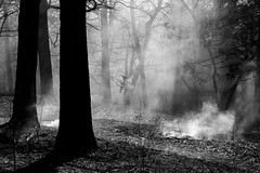 Into the Woods (Ben Roffelsen Photography) Tags: toronto high park burn fire forest blogto fujifilm x100f