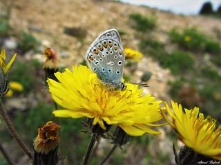 Butterfly 1216