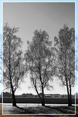 (Evgeny_Ukhov) Tags: irkutsk foto sky russia tree black white monochrome монохром frame рамка дерево черное белое иркутск фото россия небо