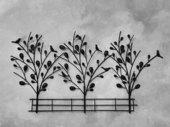 Perks of being a Wallflower (jasonsong8) Tags: trees metal black white iphone sa