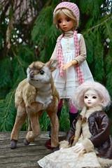 Baby Bushbuck (Emily1957) Tags: bushbuck babyanimal toys toy dolls doll resin light naturallight nikon nikond40 kitlens availablelight antelope