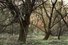 Sunset (yve_all) Tags: biotop seelenheil sonnenuntergang sunset sun sonne bäume trees frühling spring licht light colours farben natur nature landscape landschaft blickwinkel view