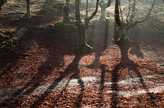 _DSC1433 (adrizufe) Tags: beechwood hayedo hojarasca deadleaves invierno windows zeanuri arratia nature naturaleza bizkaia visiteuskadi adrizufe adrianzubia aplusphoto ilovenature basquecountry shadows