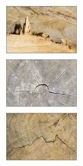 Wooden landscapes (Fabien Husslein) Tags: paysage landscape wood bois pattern motif texture art nature triptyque