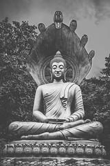 Nâga, protecteur de Bouddha (Tom Piaï Photographie) Tags: statut bouddha bouddhiste bouddhisme nâga serpent protecteur sept têtes priere montagne mountain laos lao champasak travel traveler explorer voyage voyageur ngc natgeo nationalgeographic noiretblanc blackandwhite sombre