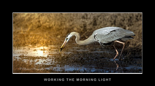 Working the Morning Light