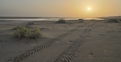 Sunset in the Desert (Robert Haandrikman) Tags: blue uae abu dhabi dubai desert hatta dam moon animal wildlife dune bashing hiking travel holiday sun hot 4x4 cars water emirati