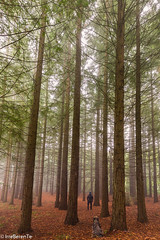 Breathing Forest (IrreBerenT) Tags: forest lost friends secuoyas cantabria montecorona irreberentenataliaaguado bosque fog trees dog factorhumano humanfactor longexposure