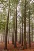 Breathing Forest (IrreBerenTe Natalia Aguado) Tags: forest lost friends secuoyas cantabria montecorona irreberentenataliaaguado bosque fog trees dog factorhumano humanfactor longexposure