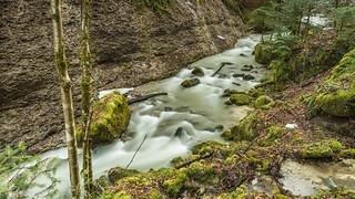 wild nature-Feldbach Wattwil 5.)-1264