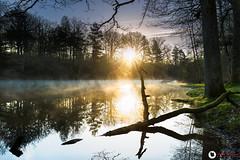 Etang Rompu (FabBel78) Tags: sunset etang st léger yvelines forêt rambouillet