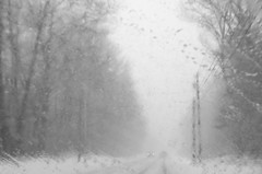 A Winter Drive (amy20079) Tags: maine newengland snowstorm snow trees moody atmospheric gray nikond5100 rural cars road blackandwhite blizzardstella blizzard noreaster poetic