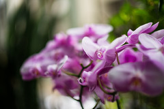 DSC04328 (藍牙王子) Tags: nature flower tulip bokeh colorful plant centralpark manhattan nyc spring sony 景深 明亮 花 植物 安詳 戶外 微距 背景虛化 相片框 黑色背景