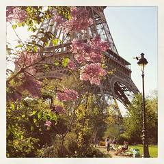 Paris is so pretty in the spring (milleluce.com) Tags: paris eiffeltower toureiffel romantic eiffelturm springfever springtime blossoms