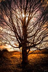 Tree of Life (Žèę Ķ) Tags: 7d canon clouds harbor harbour landscape ocean sea seascape sky tree canada richmond water sunrise yellow golden trail outdoor sunburst sun light