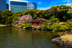 Teahouse of Hama-rikyu Gardens : 浜離宮恩賜庭園燕の御茶屋 (Dakiny) Tags: 2017 spring april japan tokyo chuo chuoward park garden hamarikyugardens city street outdoor lanscape architecture japanesearchitecture water pond plant tree flower cherry blossom cherryblossom nikon d7000 sigma 1770mm f284 dc macro os hsm sigma1770mmf284dcmacrooshsm nikonclubit