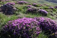 IMG_4286 Alborz Mountains, Iran