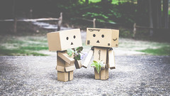 Bouquet (#Weybridge Photographer) Tags: adobe lightroom canon eos dslr slr mk ii danbo danboard kiyohiko azuma manga cardboard box amazon robot character figure mkii flower flowers bouquet couple