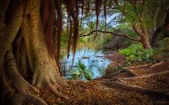 dans une brise douce... (JDS Fine Art Photography) Tags: trees lake nature blue green inspirational beauty naturesbeauty naturalbeauty pastoral serenity calm peaceful