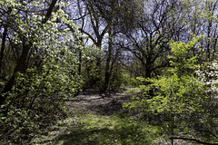 Paths less traveled (aerojad) Tags: chicago spring flower flowers nature flora washingtonpark park outdoors