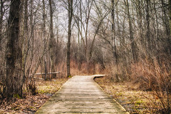 Around the Bend (flashfix) Tags: april172017 2017inphotos ottawa ontario canada canon canoneos5dmarkii 5dmarkii 100mm400mm nature mothernature merbleueconservationarea woods boardwalk trees colours lines grass moss spring landscape