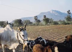 (The Glorious End) Tags: india rural countryside fuji andhra pradesh 35mmf14 xe1 vsco04