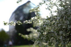 Lviv botanical garden (lwow.info) Tags: white flower green apple grey spring blossom lviv ukraine greenhouse botanicalgarden ornagery cetnerowka
