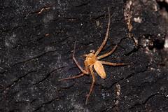 IMG_1843 (petrosli) Tags: macro nature canon spider eos500d