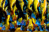 TUCUNARÉ (Luiz C. Salama) Tags: fish prime mercado peixe jornada tucunare fotoclube fotosintese