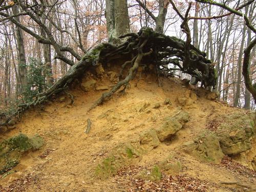 Crazy Roots / Wurzeln