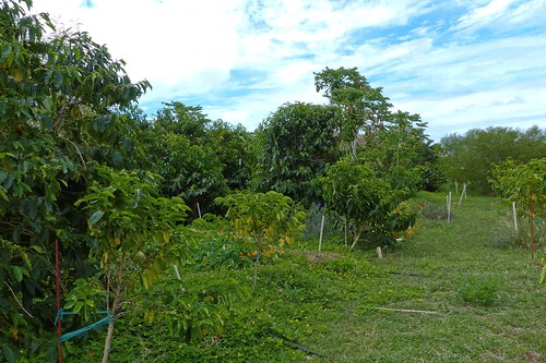Piliani Kope Coffee Farm