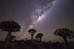 Quiver Tree Forest (TheFella) Tags: africa travel trees sky slr nature night digital forest photoshop stars landscape photography star photo aloe nikon african space astro nighttime photograph astrophotography processing nightsky dslr namibia constellations cosmos constellation d800 milkyway namibian keetmanshoop southernafrica quivertree postprocessing kokerboom starscape travelphotography toinfinityandbeyond quivertrees aloedichotoma quivertreeforest southernnamibia thefella starphotography kokerbooms choje conormacneill republicofnamibia republiknamibia republiekvannamibië thefellaphotography