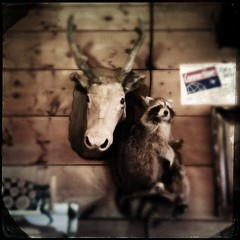 moose and racoon - sugar shack (Leo Reynolds) Tags: 4s iphone 0sec hpexif iphoneography hipstamatic iphone4s xleol30x oggl grouphipstamatic groupiphone xxx2014xxx xxgeotaggedxx