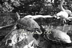 IMG_1843m (NessieBi) Tags: valencia acquarium