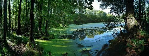 Kynžvart - zámek - Pískový rybník