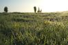 a Spring morning (Jos Mecklenfeld) Tags: flowers trees nature grass spring minolta buttercup hiking wandelen sony hike dew condensation lente wandern dauw frühling nex 3n boterbloemen minoltaaf28f28 hahnenfus sonynex laea2 sonylaea2 nex3n sonynex3n