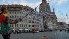 Dresden Girlande