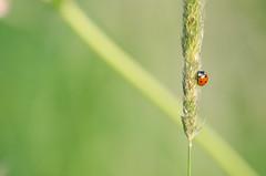 Evening bike ride (Aienhime) Tags: nature evening utrecht ladybird