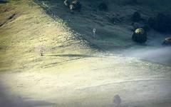 Numulgi 2 (dustaway) Tags: morning trees winter sunlight fog landscape countryside foggy earlymorning australia pasture valley nsw hillside fenceline ruralaustralia northernrivers rurallandscape numulgi morninglandscape cooperscreekvalley
