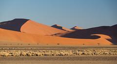 Three Pyramids (MrBlackSun) Tags: red nikon dunes dune ripples namibia sossusvlei namib d600 sossus namibdesert naukluft namibnaukluft nikond600 namibnaukluftnp