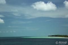 WildQuest Dolphin Swim - 12/2014 (Wildquest Bimini) Tags: wild swim dolphins bahamas bimini dolphinquest wildquest dolphinunderwater underwaterdolphin swimwithdolphin atmoji