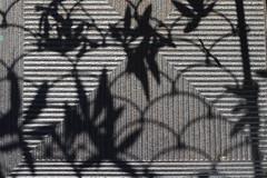 Schatten Bltter (honiigsonne) Tags: shadow texture licht leaf shadows blatt bltter schatten surfaces oberflchen oberflche lichtspiel textur sureface