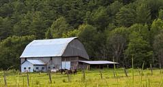 The blue barn  La grange bleue (Chizuka2010) Tags: horses barn rural fence farm campagne ferme grange omd chevaux fenceposts bluebarn hff 40150mm ruralscene ruralit qubecrural fencephotography ruralqubec fencefriday olympusomdem5 omdem5 chizuka2010 grangebleue