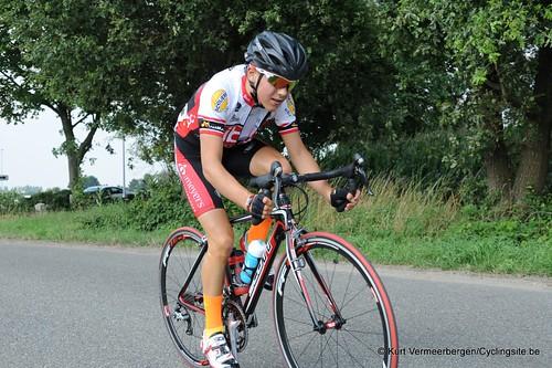 Geel Oosterlo  (137)
