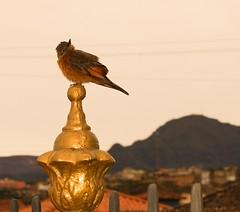 Bird (@luizjrgarcia) Tags: life minasgerais bird church minas dove sony mg igreja vida passion congonhas alpha paixo passaro matosinhos a37 luizgarcia alpha37 slta37