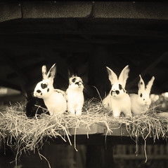 (bobandmermaid) Tags: rabbits