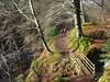 Walking in Glenesk. (Flyingpast) Tags: nature trail bridge walk woods glenesk scottish angus hike woodland trees leaves outdoors people path