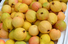 Delicious mature yellow guava fruits (phuong.sg@gmail.com) Tags: arrangement assortment background buy closeup crop crunchy delicious dessert detail diet eat exotic food fresh freshness fruit green guajava guava harvest health healthy juice linnaeus many market mature nature nutrition organic pile produce psidium ripe round seed sell species stand texture tropical yellow