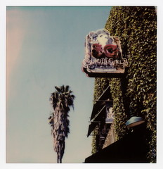 Suicide Girls Sign (tobysx70) Tags: the impossible project polaroid slr680 frankenroid sx70 door rollers color film for 600 type cameras beta 30 3 0217 pioneer member test impossaroid suicide girls sign tamarind avenue franklin village hollywood los angeles la california ca neon palm tree ivy blue sky toby hancock photography